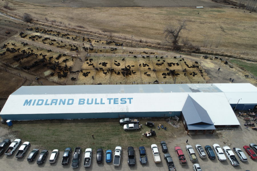 Midland Bull Test Station