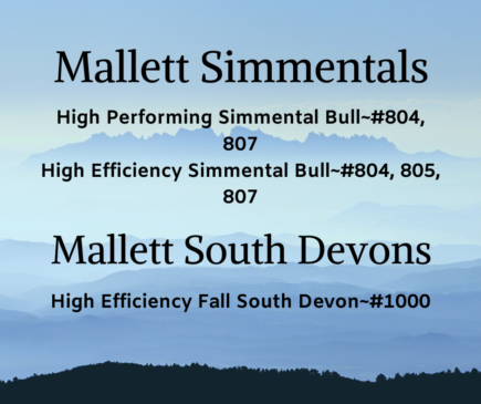 Midland Bull Test Simmentals
